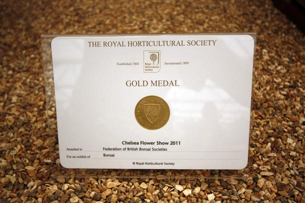 Rhs gold medal for fobbs swindon district bonsai - Chelsea flower show gold medals ...