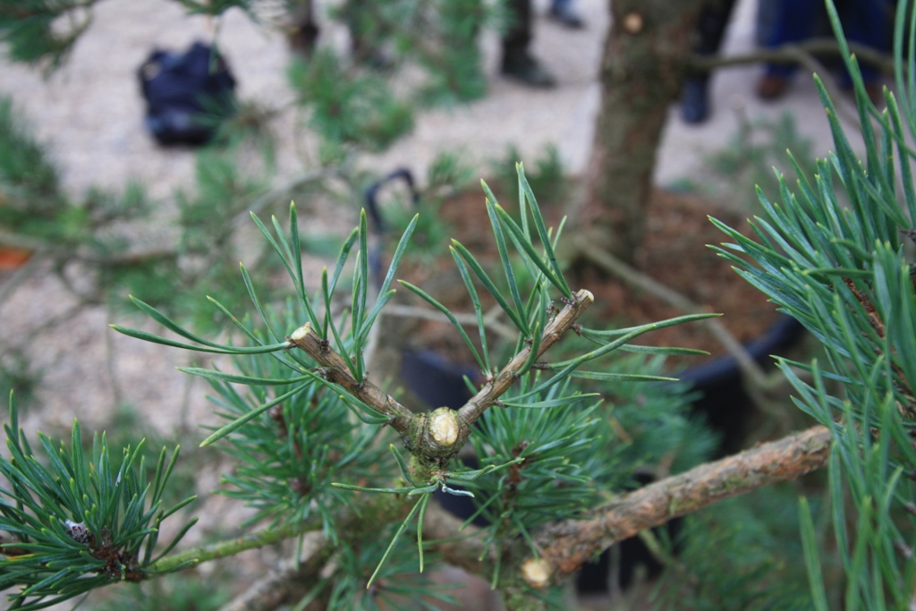Close up of formative pruning