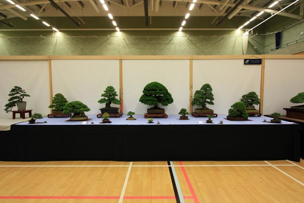 Swindon Society at Bonsai World 2011