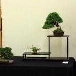 Best Shohin at Bonsai World 2011