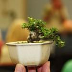 Tiny Trees with Bob & Terry