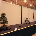Artistic Bonsai Circle Best visiting Society