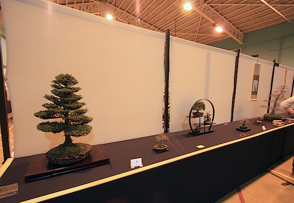 Artistic Bonsai Circle