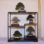 Best Shohin Display - our nana-ten