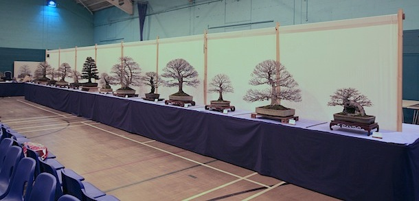 Swindon Bonsai Society club trees