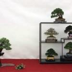 Best Shohin Display