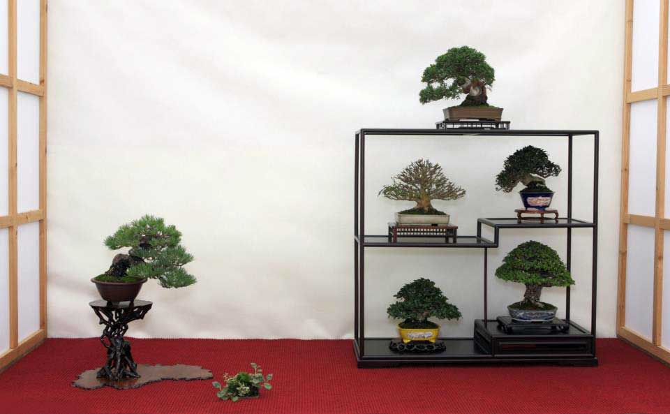 Best Shohin Display