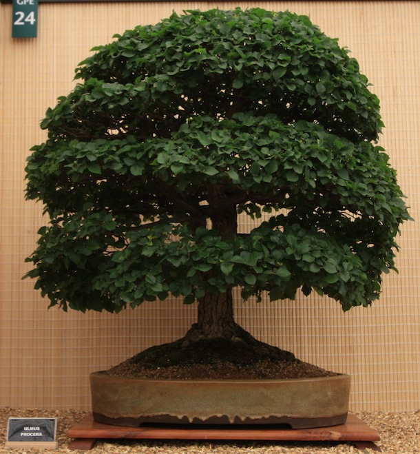 reddit bonsai guide