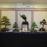 Dragon Bonsai at Wessex Show 2012