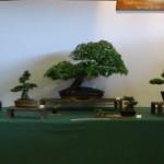 Warminster Bonsai Club
