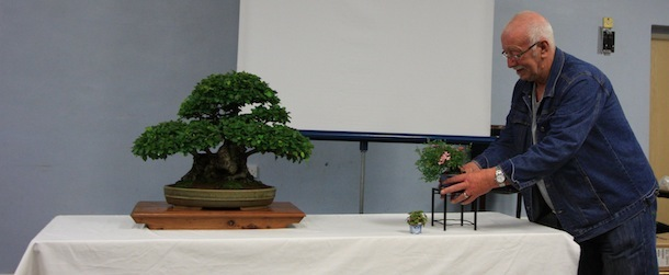 Displaying Bonsai Trees