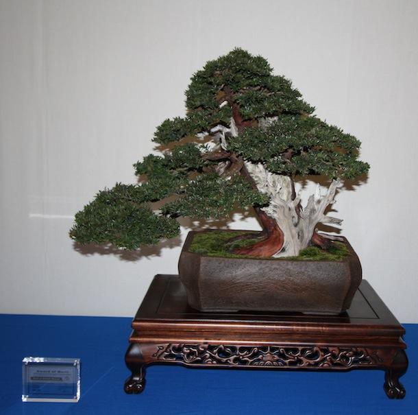 Tremendous Yew Trees As Bonsai Wiring Digital Resources Antuskbiperorg