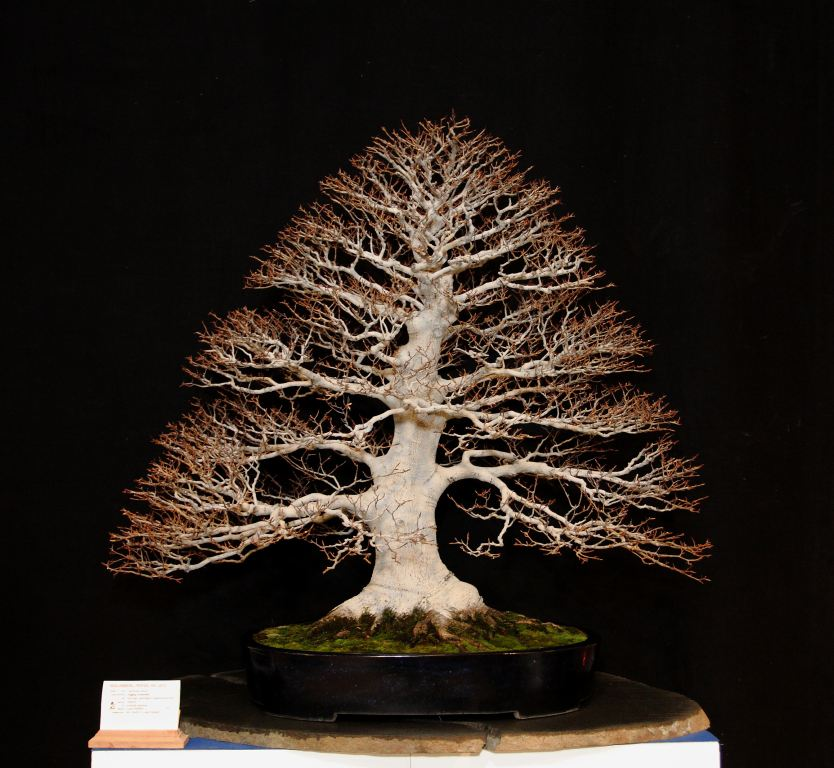 Deciduous Prize Winner