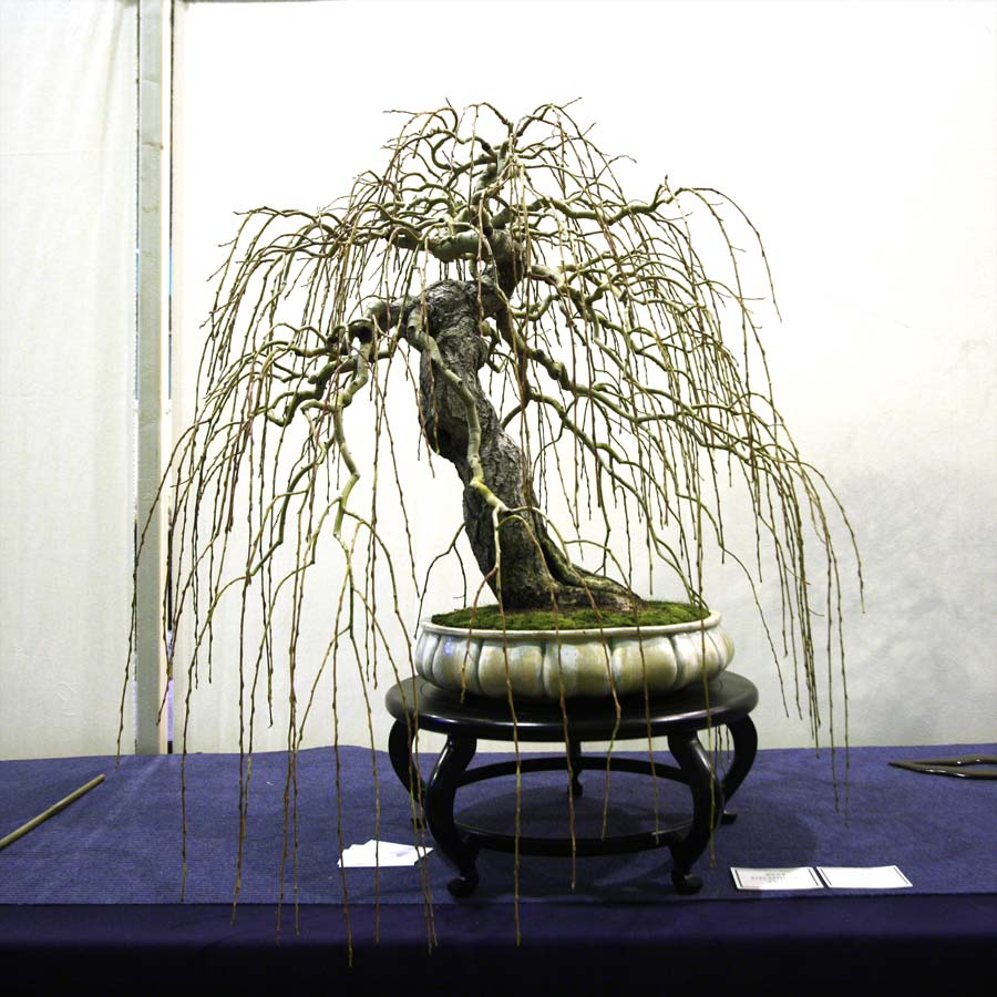 Simon Temblett, Willow - Best In Show