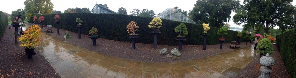 RHS Wisley Bonsai Walk