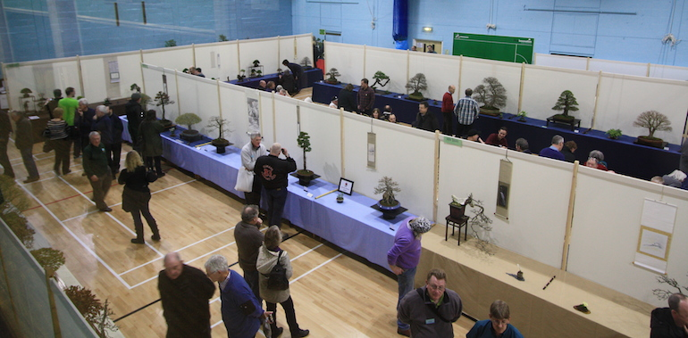 Swindon Bonsai Winter Image Show 2014