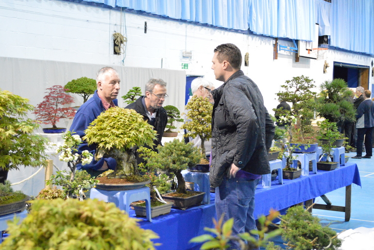 Bonsai Traders Show Coventry