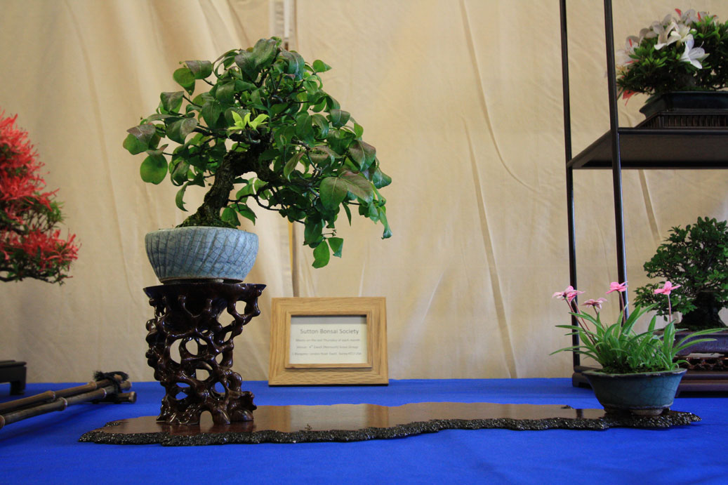 Sutton Bonsai Society