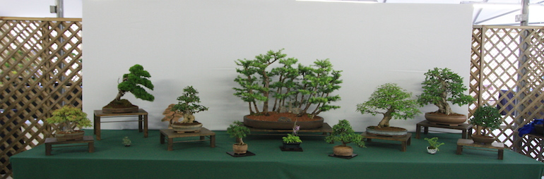 Warminster Bonsai Club