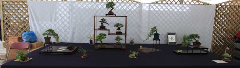 Eastleigh Bonsai display