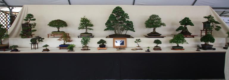 Roots Bonsai Show Newbury Display