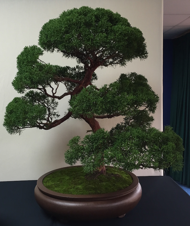3rd place in te public vote a Juniper owned by Johnny Gires of Middlesex Bonsai Society