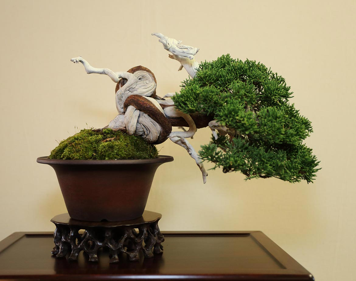 Best Shohin (individual tree)