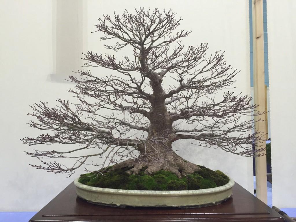 Best Deciduous Tree: Warren Radford
