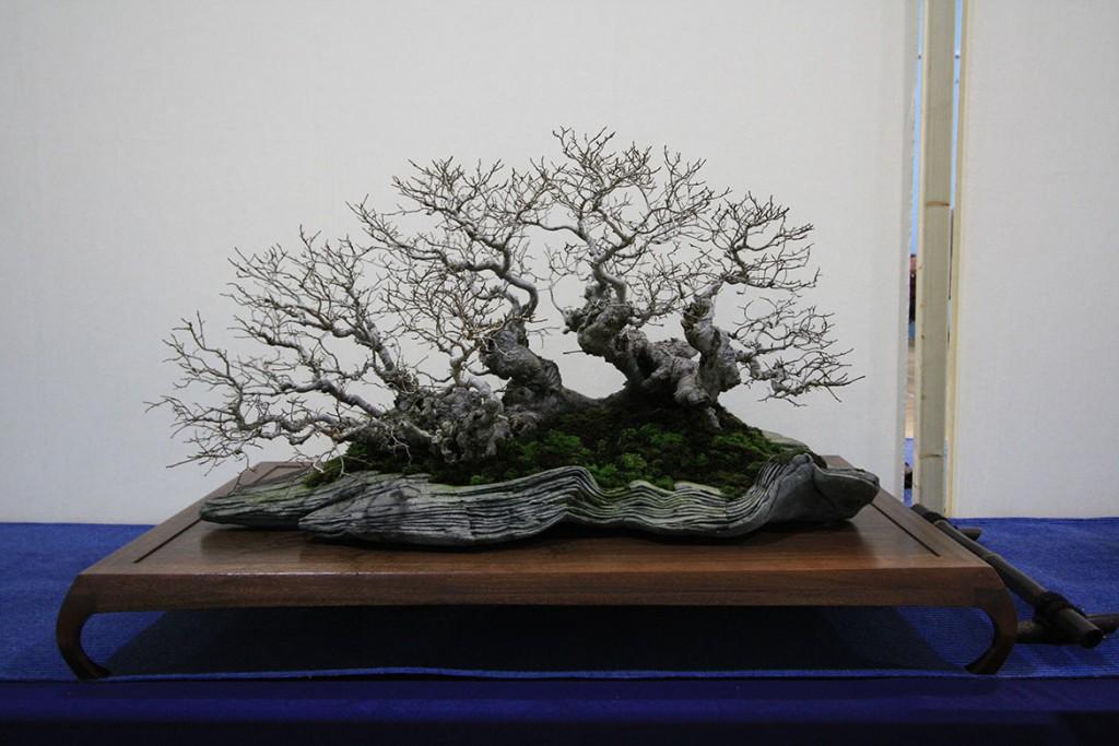 Best Tree/Pot Combination: Will Baddeley