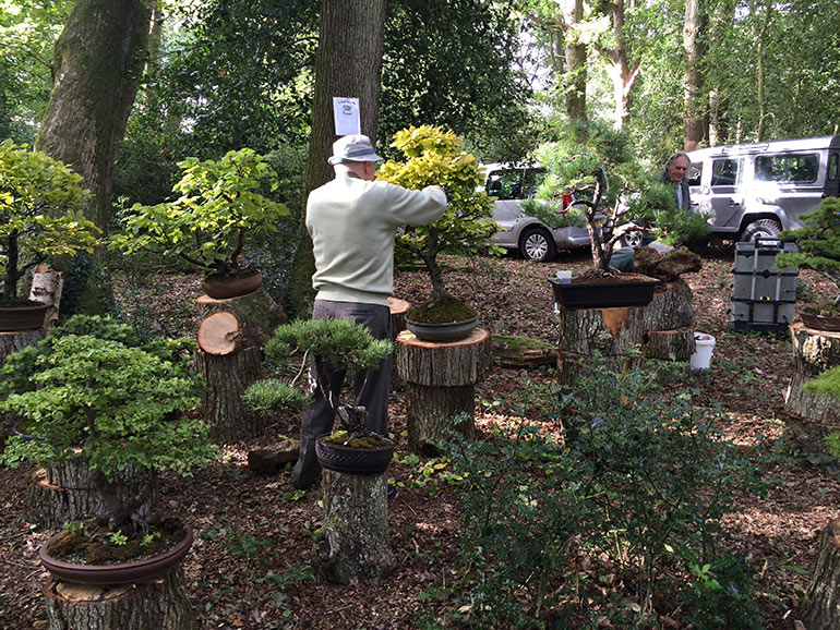 Solent Bonsai Society