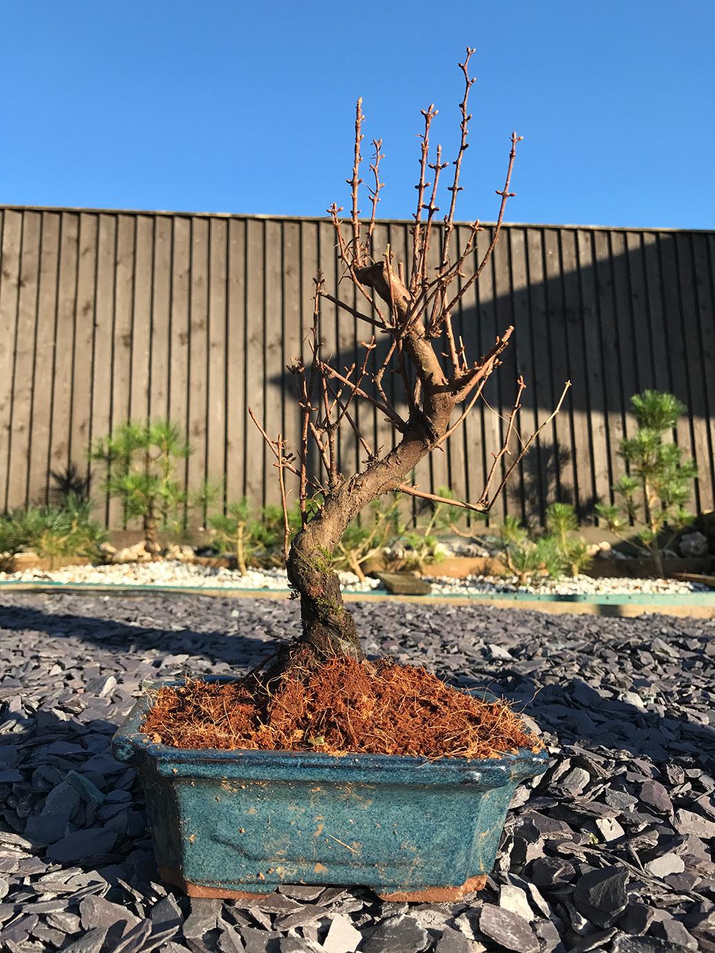 Winter show tree raffle prize 2017