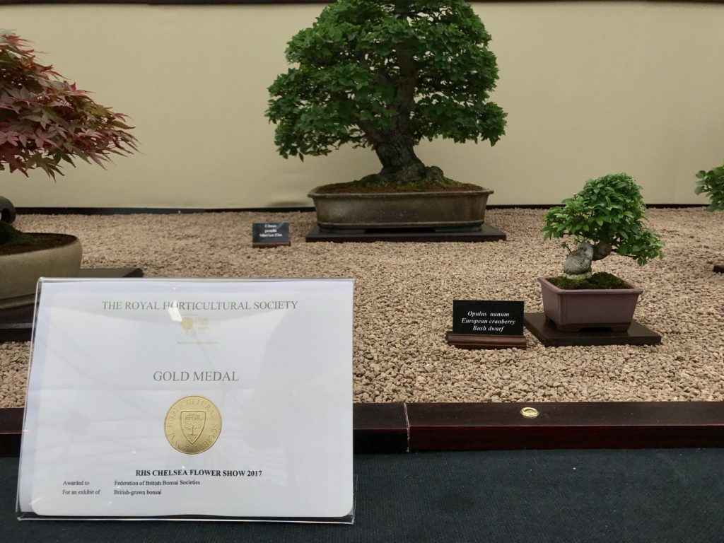 Gold At Chelsea Swindon District Bonsai