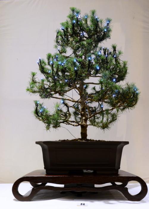 1st place, DA Picea
