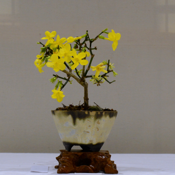 3rd place, PB Winter Jasmine